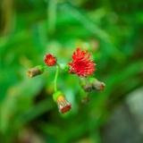 """""""Blooming in Hawaii"""" by Marlene Herrera"""