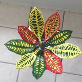 """Croton Leaf Bowl"" by Teresa Smith Dominguez"