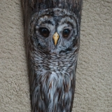 """""""Barred Owl - Palm Frond"""" by Nancy Lauby"""