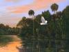 """""""Homosassa River"""" by Hernie Vann"""