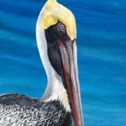 """""""Pelican"""" by Bibzi Priori"""