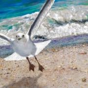 """""""Seagull"""" by Bibzi Priori"""