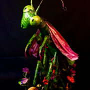 Ms Mantis by Kathy Carrier